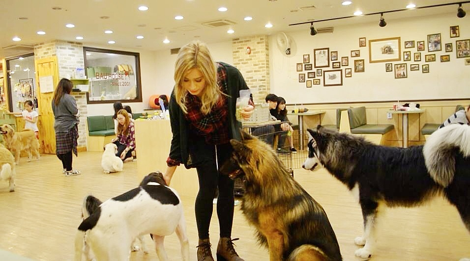 Dog Cafe | Bau House Dog Cafe Korea