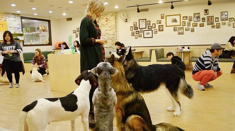 Dog Cafe | Bau House Dog Cafe Korea