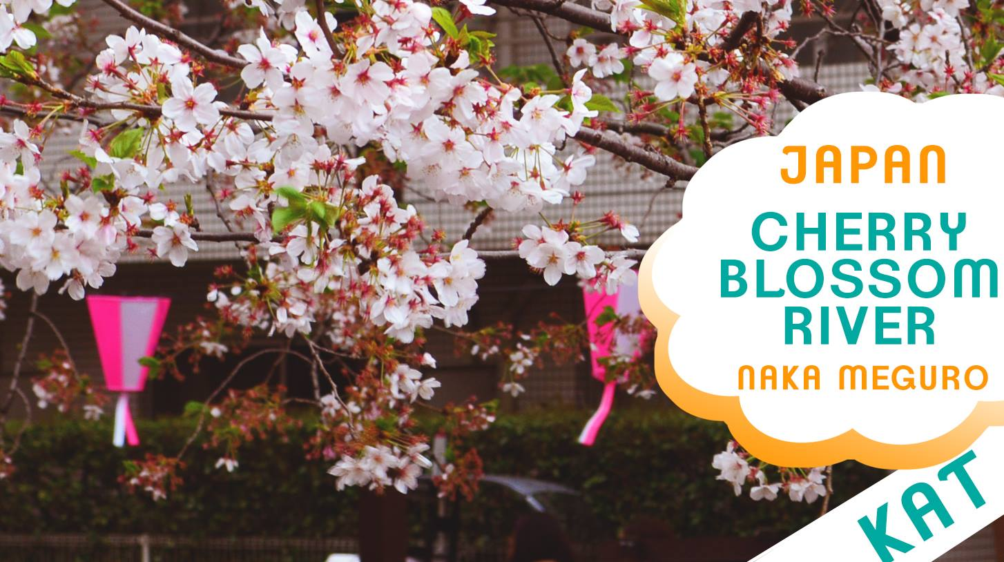 CHERRY BLOSSOMS IN JAPAN | NAKA MEGURO RIVER